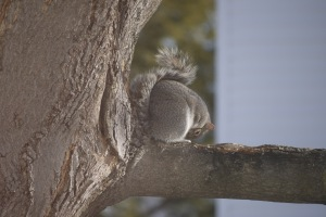 Even Squirrels do Yoga