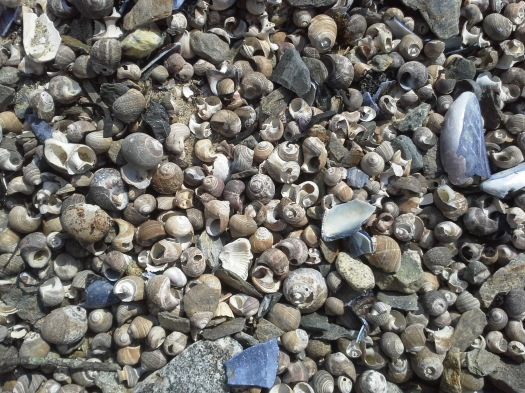 "Lots of tiny shells, or as Derek called them ""pretty dead things."""