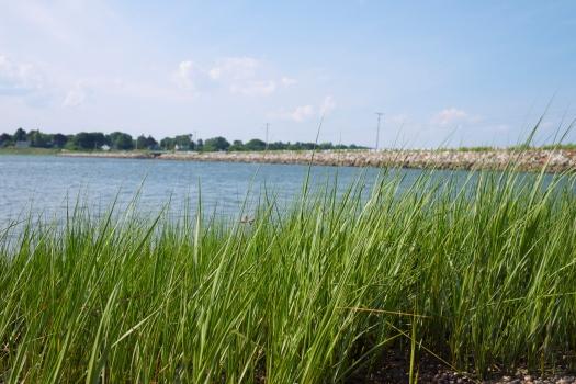 I love sea grass. I have way too many photos of it.