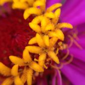 Super close up with iPhone macro lens.