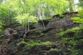 Sideways tree in the gorge.
