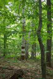 Striped tree