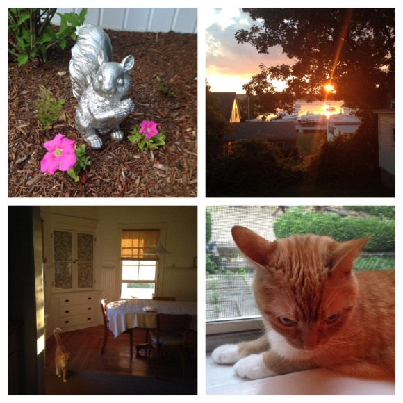 Clockwise from left: SQUIRREL! - Rhode Island sunsets are total showoffs - Magic light in the J&S dining room - Murphy plotting something.