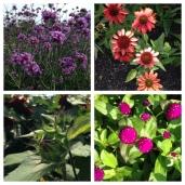 Pretty flowers at Prescott Park.