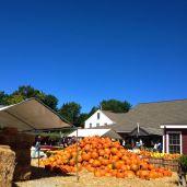 Pile o' Pumpkins