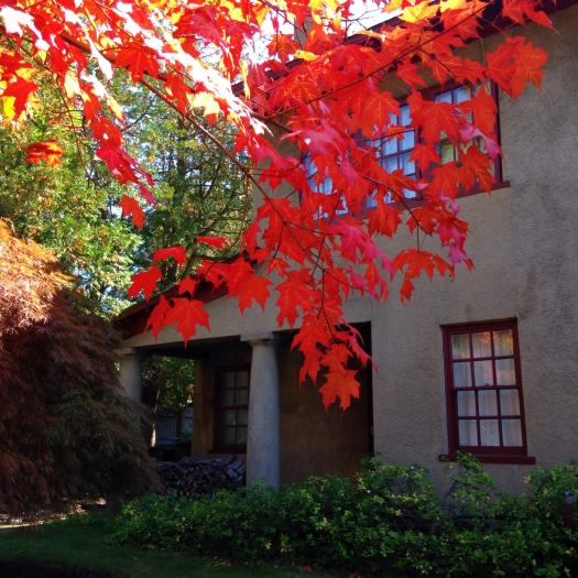 Bright red leaves in front of a pretty Manchester house.