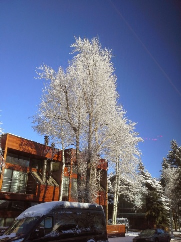 White trees and nice house